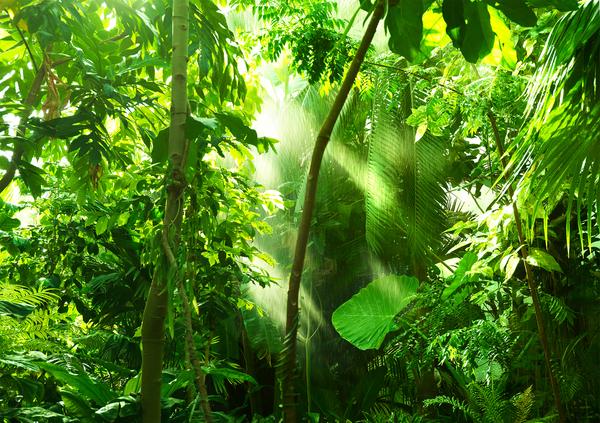 Vihreyden kaipuuseen
