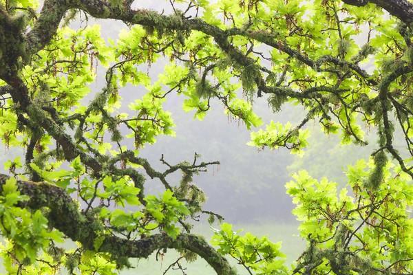 Metsä ja puut